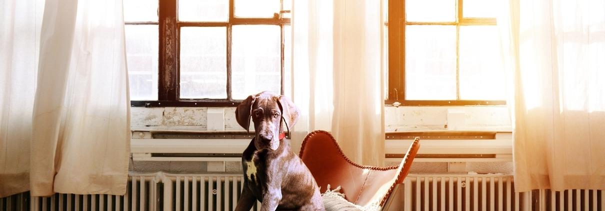 Hund im Sessel