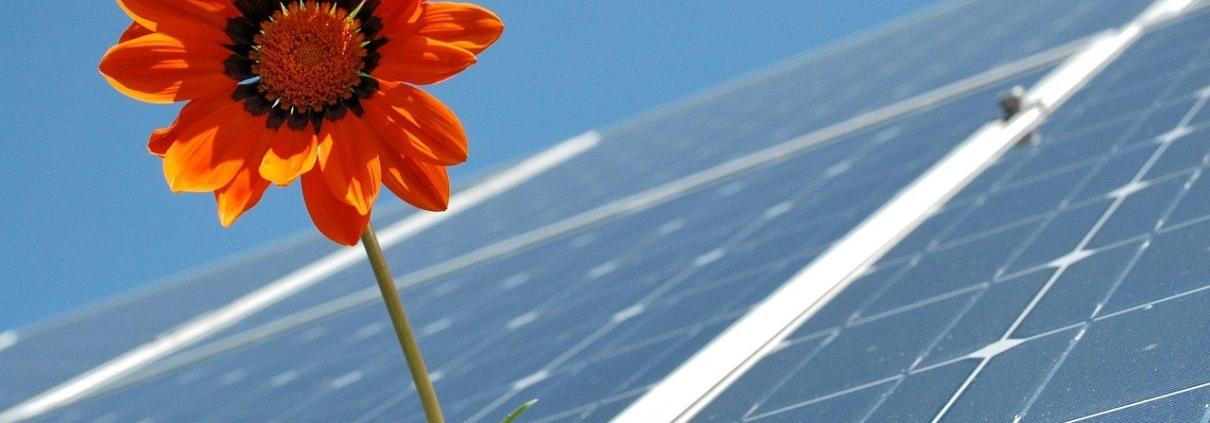 Solar mit Blume